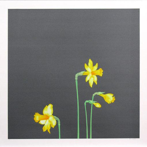 Paco Lagares; Narcisos